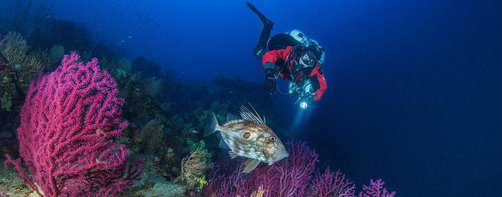 Meraviglioso Mediterraneo: la Secca di Zí Costante