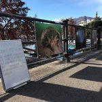 Pulizia Lago Maggiore 2017